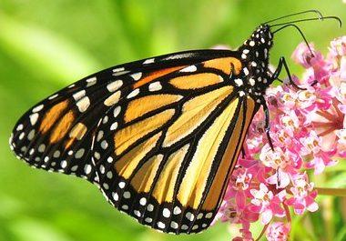 ButterflyLife.net